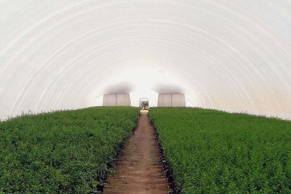 gallery-agriculture-air-dome